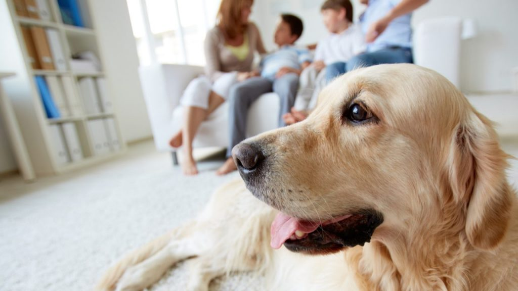dog in living room with family